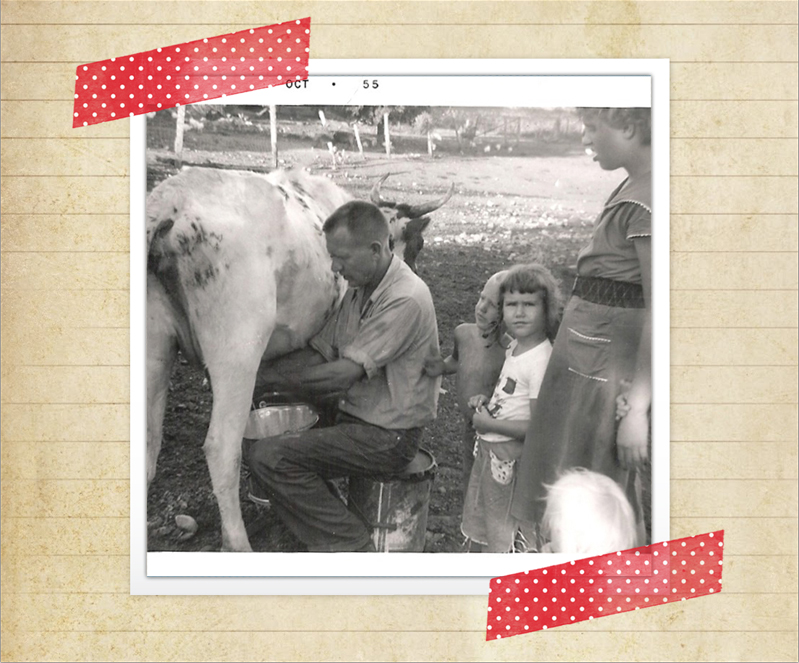 Milking the cow back in 1955