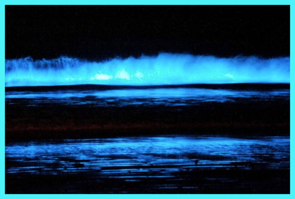 PHOSPHORESCENT WAVES